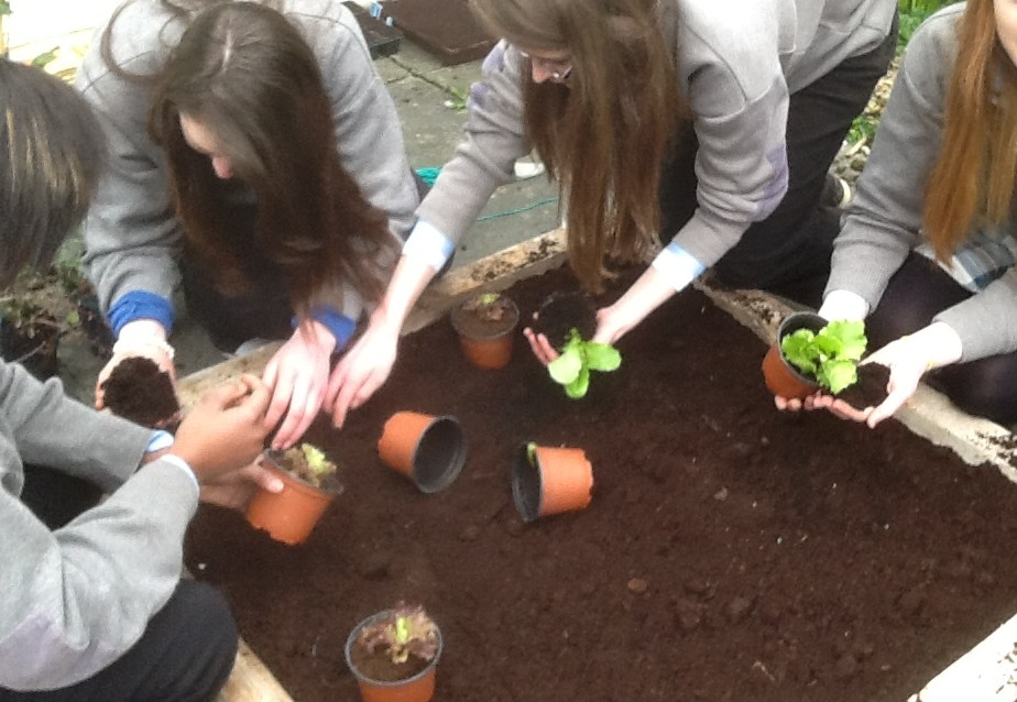 sowing flowers