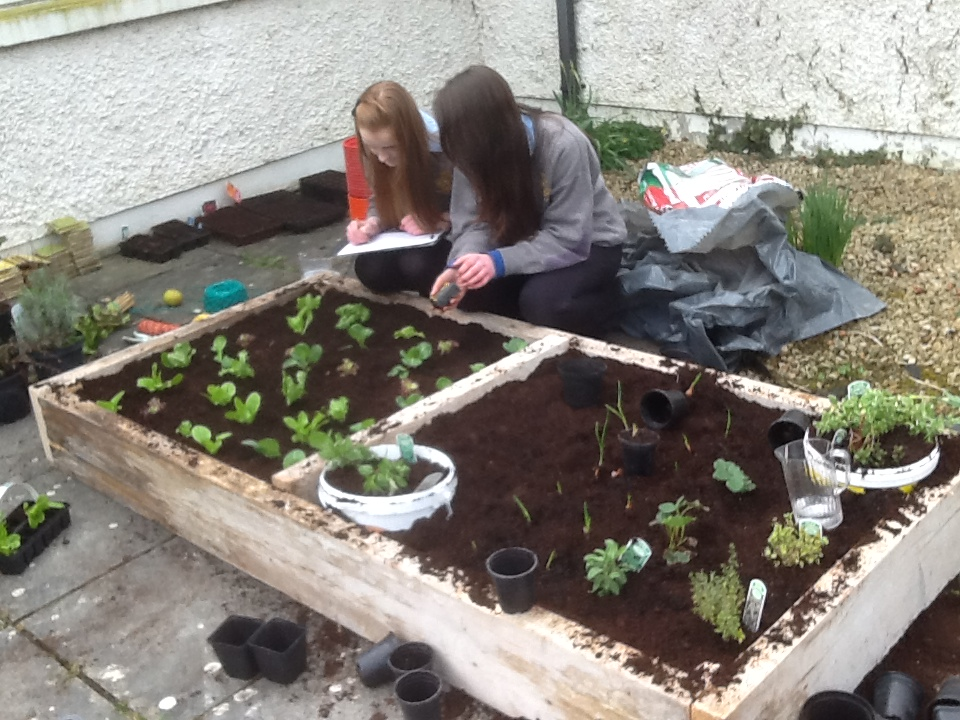 bed planting